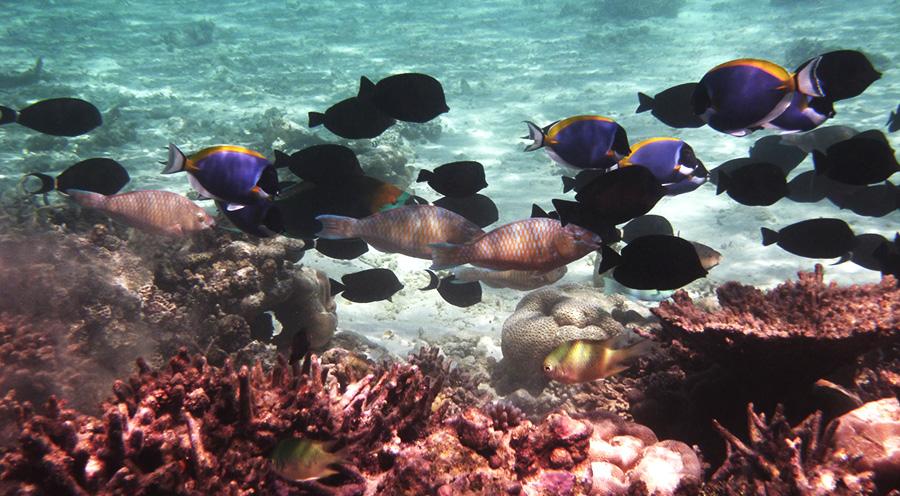 sensationsvoyage-voyage-sri-lanka-maldives-snorkeling-plongee-3