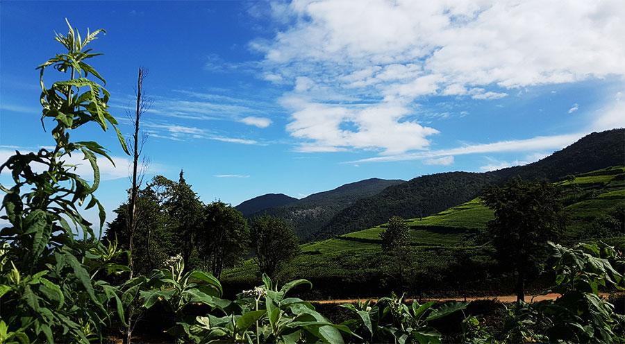 sensations voyage incontournables sri lanka que faire que voir voyage-sri-lanka-photo-nuwara-eliya-plantations-de-théé