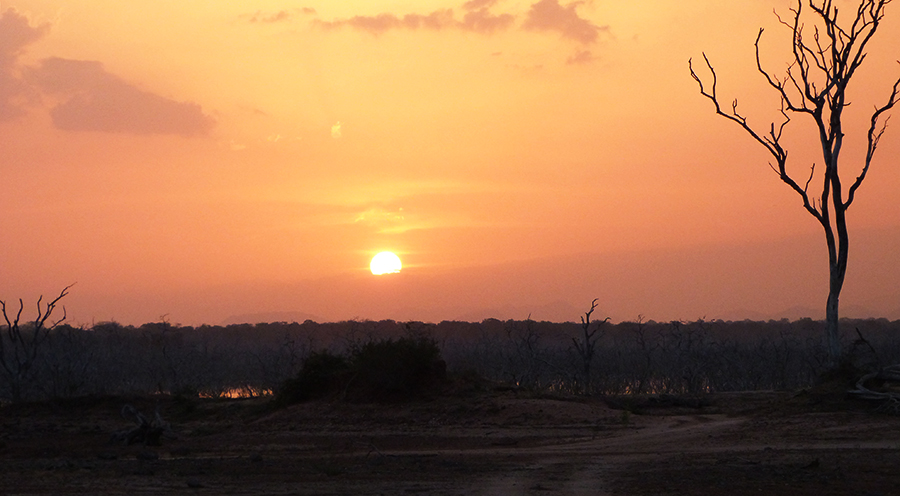 sensationsvoyage-voyage-sri-lanka-photos-sunset-safari-yala