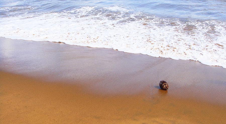 sensationsvoyage-voyages-destination-photos-guyane-beach-coco