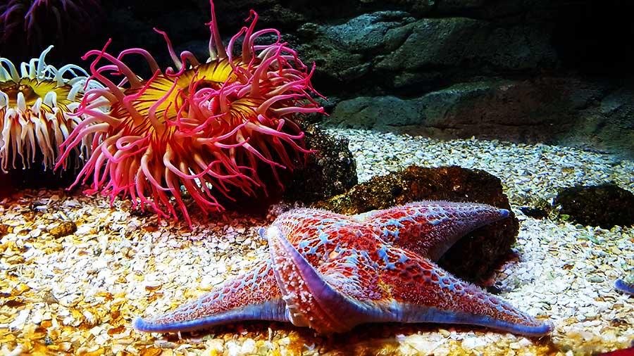 Aquarium Sea Life Paris, étoile de mer et anémones - Sensations Voyage le blog, expériences
