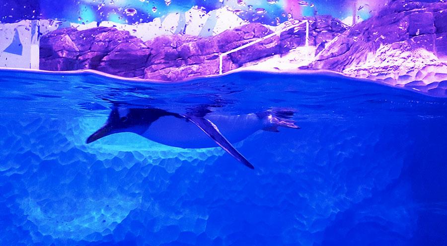 Aquarium Sea Life Paris Val d'Europe, l'île aux manchots - Sensations Voyage le blog, expériences