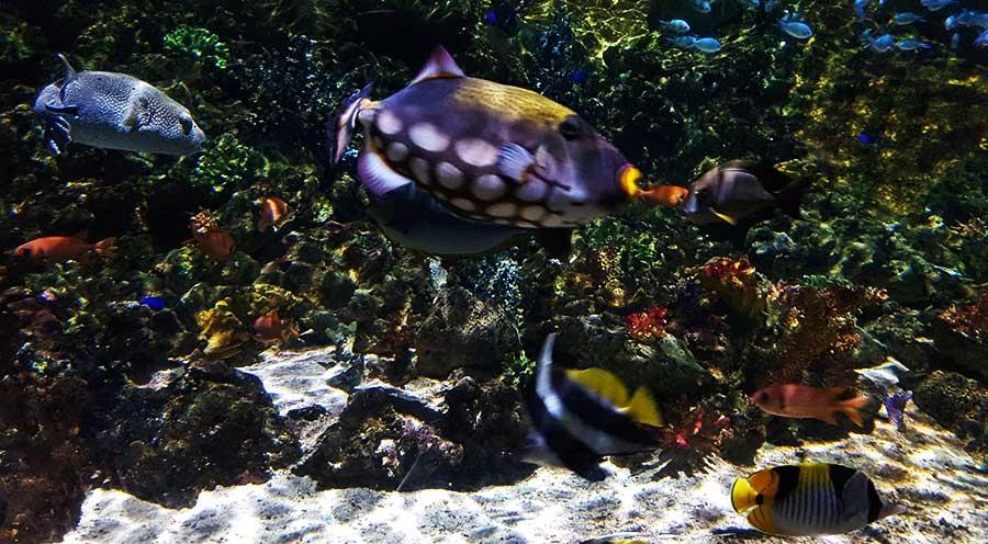 Aquarium Sea Life Paris, le récif corallien - Sensations Voyage le blog, expériences