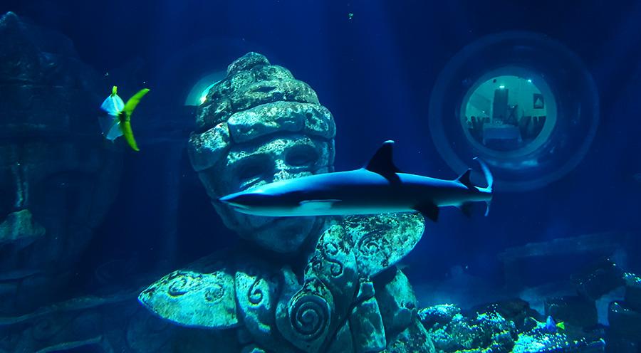 Aquarium Sea Life Paris, requin de l'Atlantide- Sensations Voyage le blog, expériences
