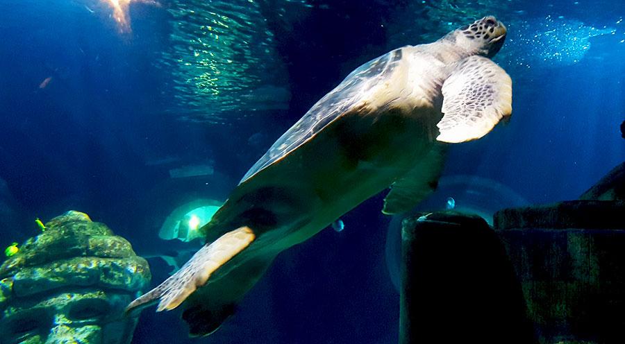 Aquarium Sea Life Paris, tortue géante de l'Atlantide - Sensations Voyage le blog, expériences
