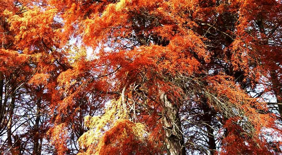 Sensations Voyages photos foret espace rambouillet experience automne orange