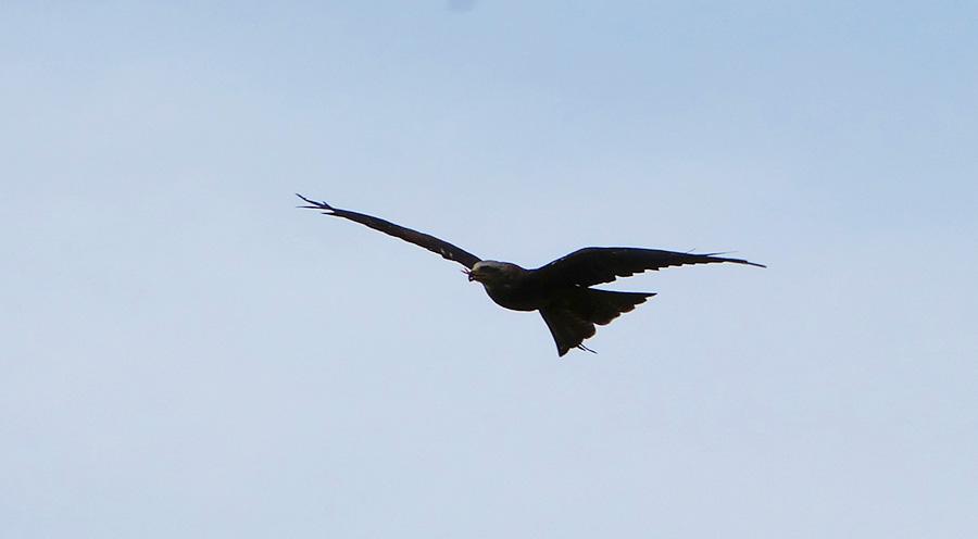 Sensations Voyages bons plans région parisienne spectacle des rapaces vol aigle espace rambouillet
