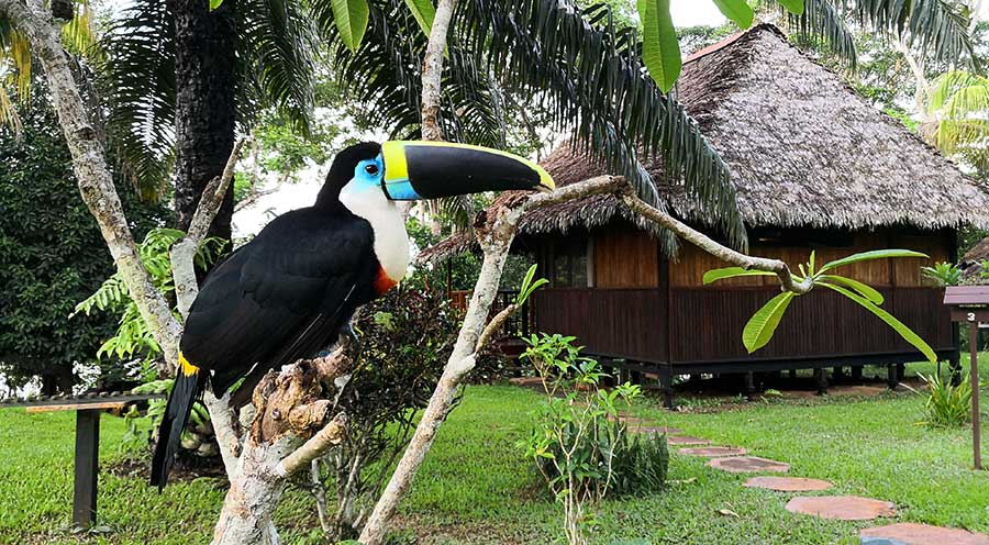 sensations-voyage-sensationsvoyage-perou-peru-amazonie-amazonia-toucan-lodge-puerto-maldonado