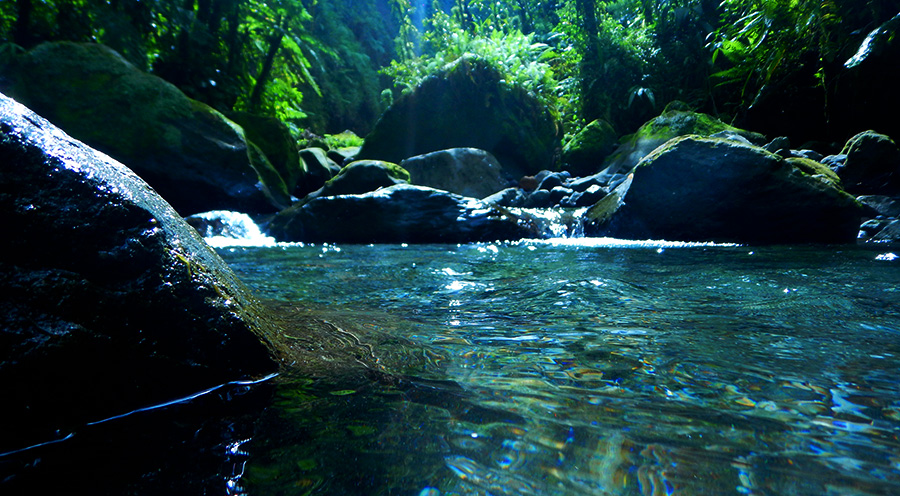 sensations-voyage-voyages-photos-martinique-gorges-falaise-canyoning-nature-riviere-experiences