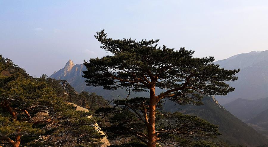 sensations-voyage-voyages-coree-du-sud-korea-seoul-seoraksan-national-park-nature-life