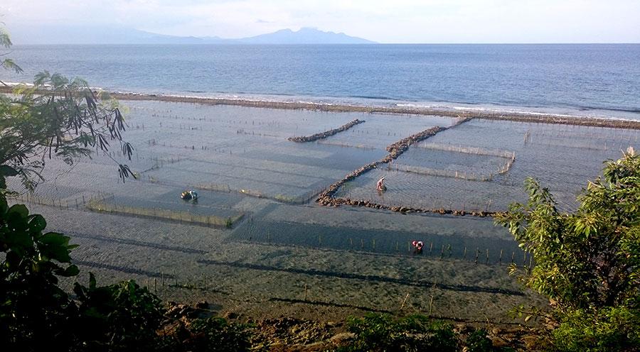 sensations voyage bali incontournables nusa penida plantations algues landscape fiels
