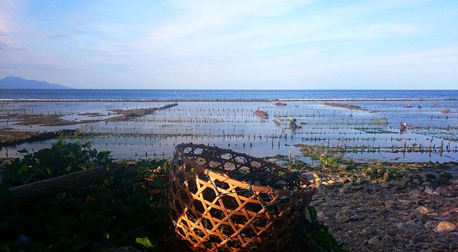 sensations voyage bali incontournables nusa penida landscape culture algues incontournables
