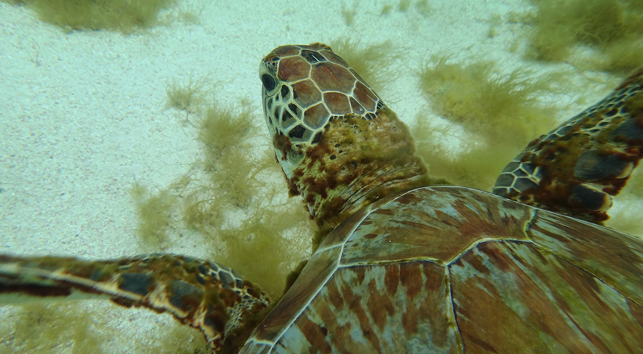 sensations-voyage-destination-guadeloupe-snorkeling-petite-terre-tortue