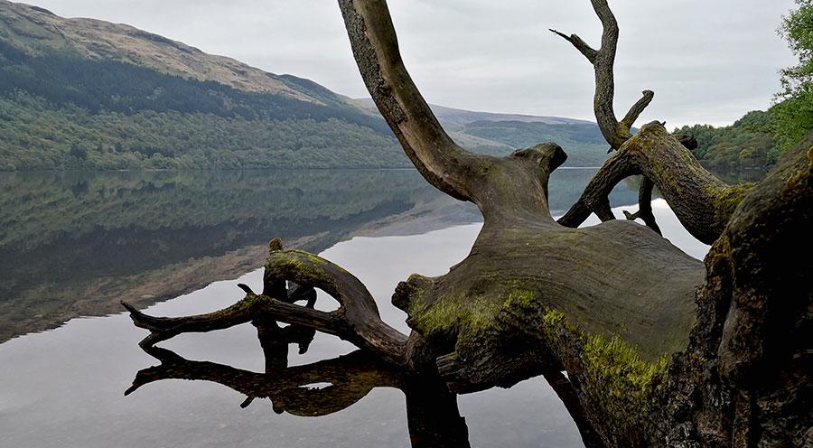 sensations-voyage-ecosse-loch-lomond-trossards-tronc-reflet