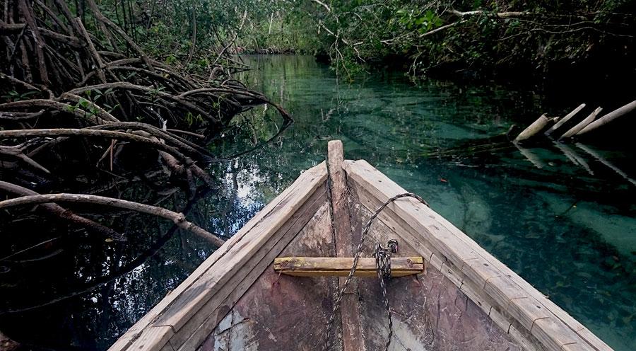sensationsvoyage-sensations-voyage-experiences-bons-plans-top-10-république-dominicaine-que-faire-incotournables-mangrove-las-terrenas