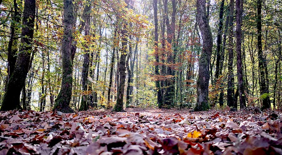 sensationsvoyage-sensations-voyage-morvan-automne-arbres-foret-feuilles