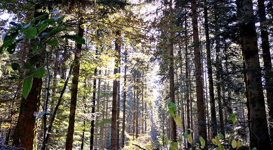 sensationsvoyage-sensations-voyage-morvan-automne-foret-blog-voyage-france-parc-regional-arbres-lumiere