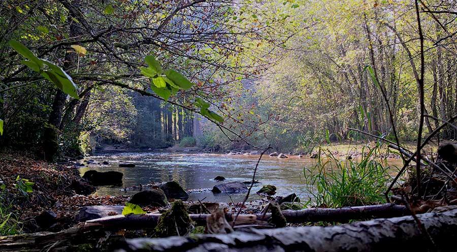 sensationsvoyage-sensations-voyage-morvan-week-end-nature-riviere-saut-du-gouloux-glux-en-glenne