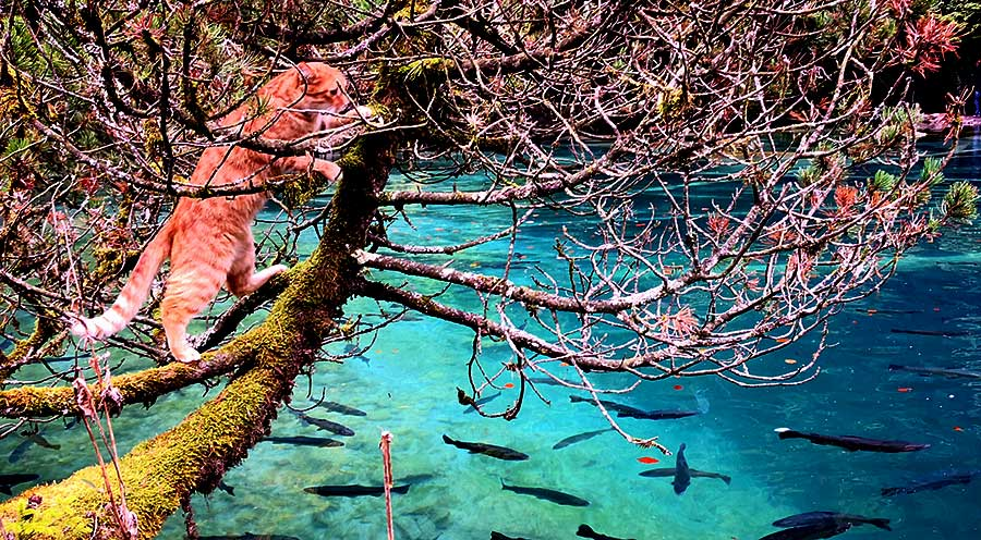 sensationsvoyage-sensations-voyage-suisse-blausee-lake-lac-bleu-chat-interlaken
