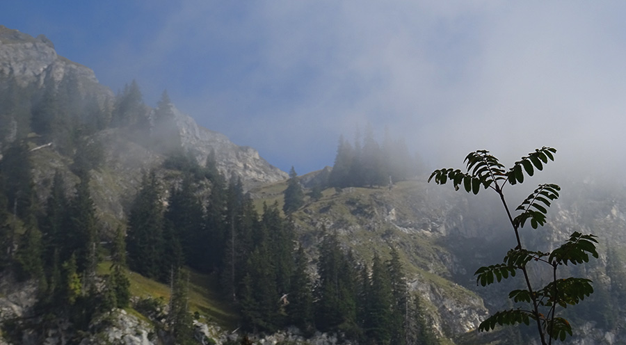 sensationsvoyage-sensations-voyage-suisse-montagne-oeschinen-brume-mood