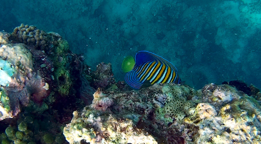 sensations_voyage_photos_bali_menjangan_snorkeling