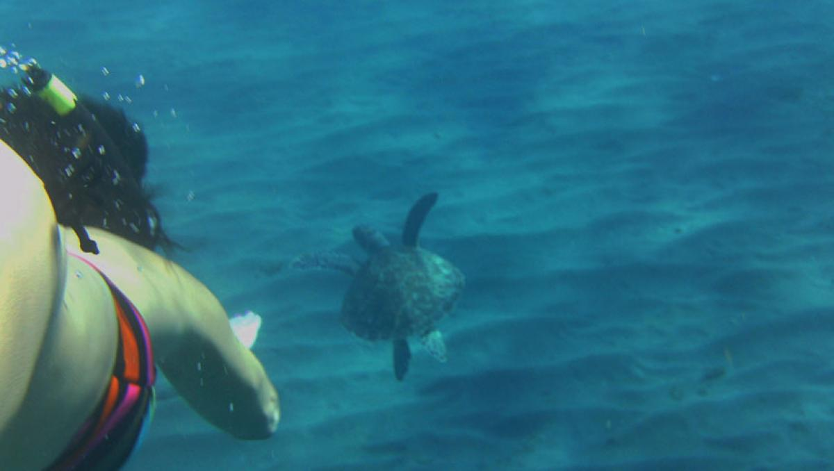 sensations-voyage-destination-guadeloupe-basse-terre-snorkeling-tortue2