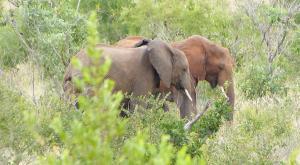 sensations-voyage-afriquedusud-safari-kruger-bébé-elephants