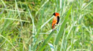 sensations-voyage-afriquedusud-safari-kruger-bird