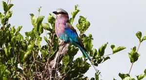 sensations-voyage-afriquedusud-safari-kruger-oiseau