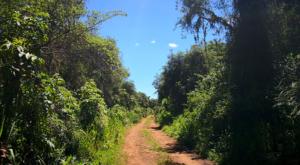 sensations-voyage-album-photos-kenya-aberdades-national-park-buffalo-treetops-landscape