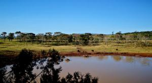 sensations-voyage-album-photos-kenya-aberdades-national-park-buffalo-treetops-waterpoint
