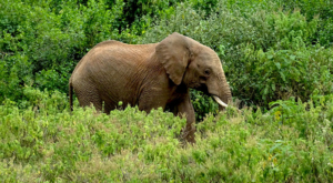 sensations-voyage-album-photos-kenya-aberdades-national-park-elephant-treetops-é