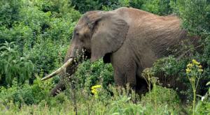 sensations-voyage-album-photos-kenya-aberdades-national-park-elephant-treetops