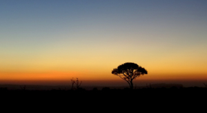 sensations-voyage-album-photos-kenya-aberdades-national-park-mont-kenya-8