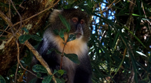 sensations-voyage-album-photos-kenya-aberdades-national-park-mont-kenya-safari-treetops-monkey