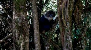 sensations-voyage-album-photos-kenya-aberdades-national-park-mont-kenya-safari-treetops-monkeys