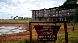 sensations-voyage-album-photos-kenya-aberdades-national-park-treetops-lodge-2