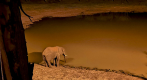 sensations-voyage-album-photos-kenya-aberdades-national-park-treetops-lodge-elephant-drinking-by-night
