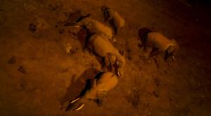 sensations-voyage-album-photos-kenya-aberdades-national-park-treetops-lodge-elephants-drinking-by-night-3