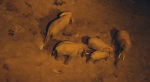 sensations-voyage-album-photos-kenya-aberdades-national-park-treetops-lodge-elephants-drinking-by-night
