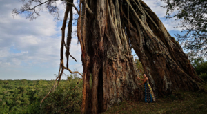 sensations-voyage-album-photos-kenya-aberdades-national-park-treetops-tree-poste
