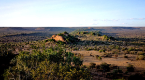 sensations-voyage-album-photos-kenya-liakipia-baboon-roc-landscape