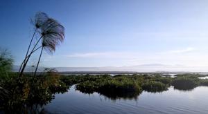 sensations-voyage-album-photos-kenya-naivasha-loldia-house-lake-cruise