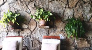 sensations-voyage-album-photos-kenya-naivasha-loldia-house-vegetal-wall