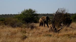 sensations-voyage-album-photos-kenya-ridding-safari-sosian-elephant-safari