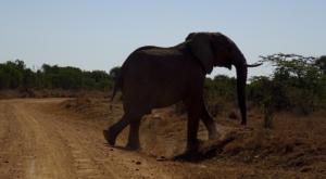 sensations-voyage-album-photos-kenya-sosian-laikipia-elephant