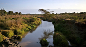 sensations-voyage-album-photos-kenya-sosian-landscape-green-nature-2