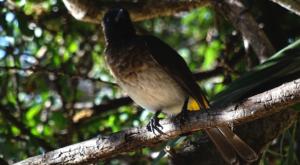 sensations-voyage-album-photos-kenya-sosian-ranch-game-drive-bird-watching-2