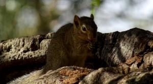 sensations-voyage-album-photos-kenya-sosian-ranch-squirrel-ecuireuil