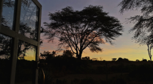sensations-voyage-album-photos-kenya-sunrise-naivasha